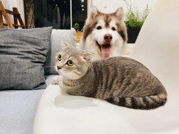 Déménagement à Lyon avec un chat ou un chien